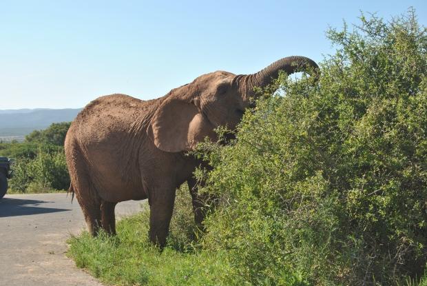 Afrika 485